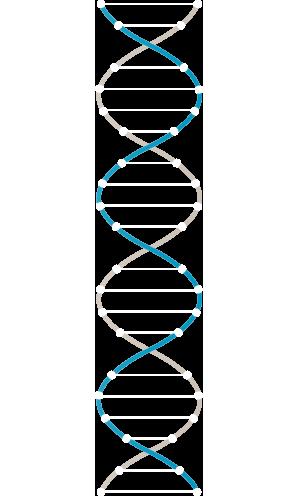 ADN Nogal